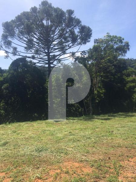 Terreno Residencial à venda em Pedro do Rio, Petrópolis - Foto 5