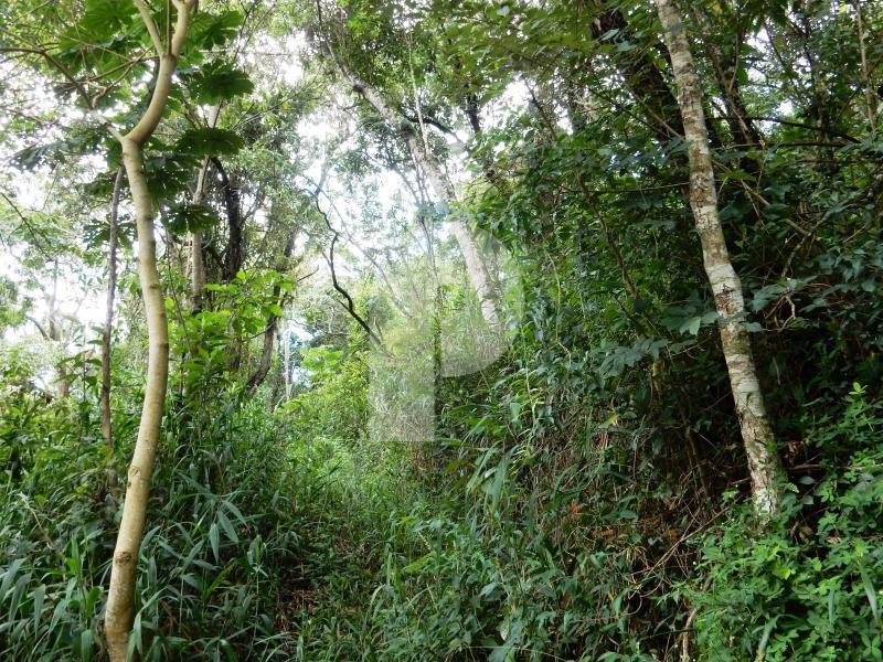 Terreno Residencial à venda em Samambaia, Petrópolis - Foto 4