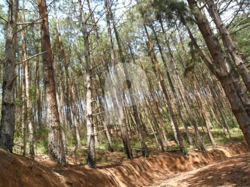 Terreno Residencial à venda em Araras, Petrópolis - RJ - Foto 2