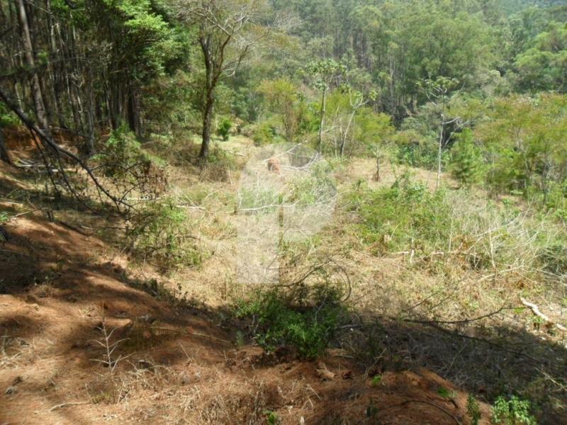 Terreno Residencial à venda em Araras, Petrópolis - RJ - Foto 3