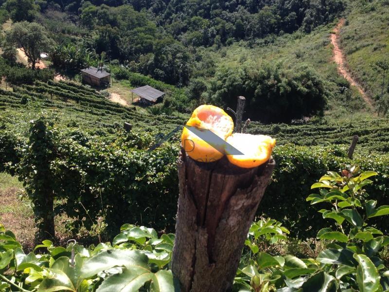 Fazenda / Sítio à venda em São José do Vale do Rio Preto, Petrópolis - Foto 6