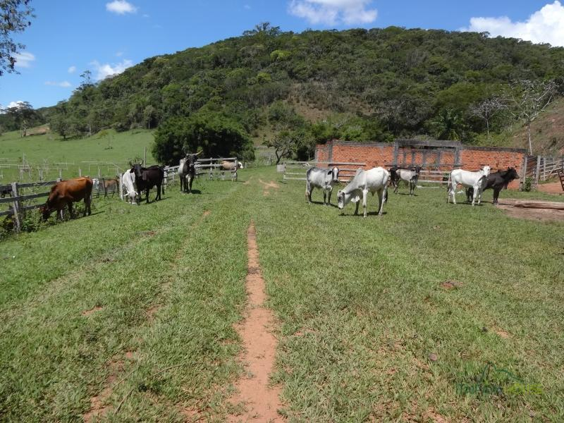 Fazenda / Sítio à venda em Centro, Areal - RJ - Foto 4