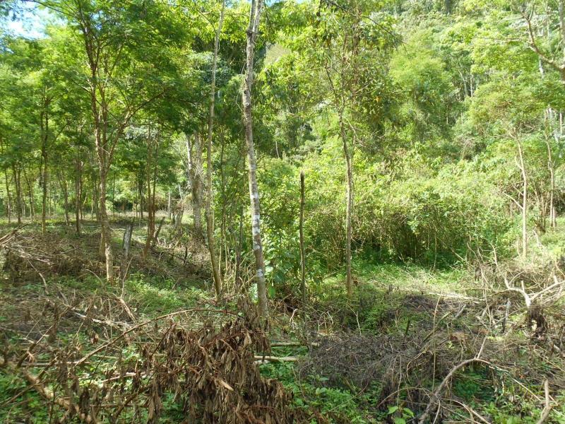 Terreno Residencial à venda em Nogueira, Petrópolis - RJ - Foto 11