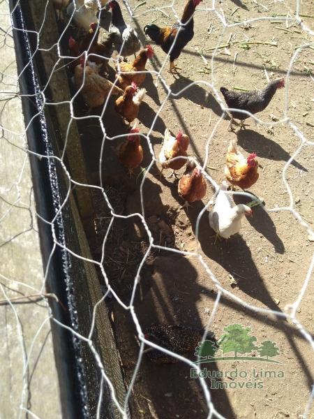 Fazenda / Sítio à venda em Corrêas, Petrópolis - Foto 8