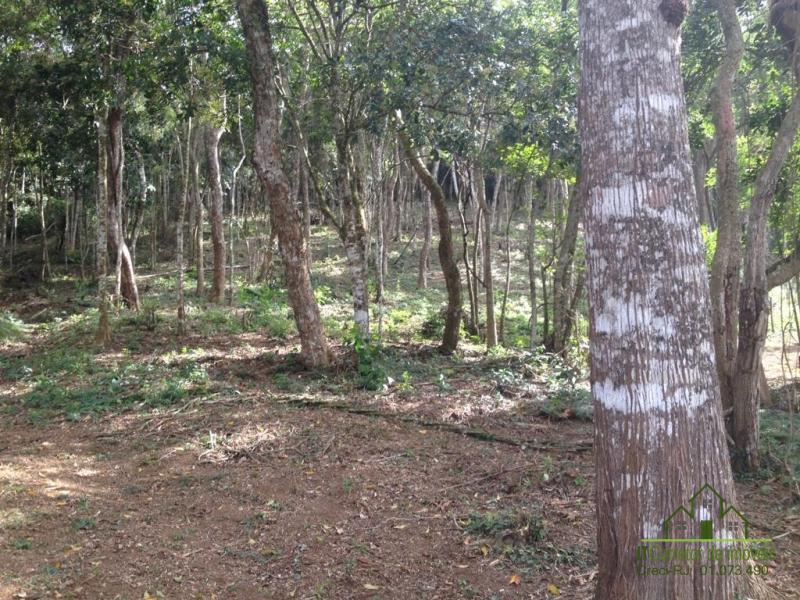 Fazenda / Sítio à venda em Vale das Videiras, Petrópolis - RJ - Foto 7