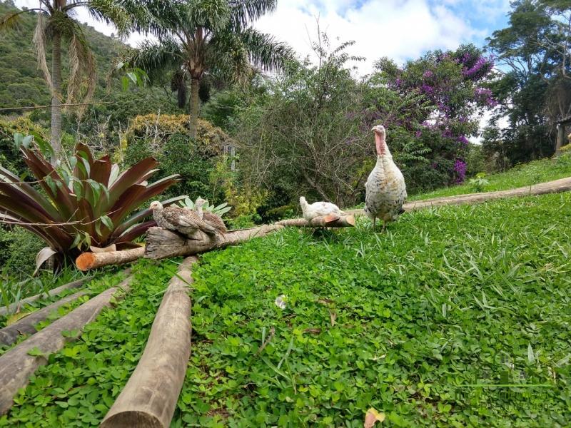 Fazenda / Sítio à venda em Vale das Videiras, Petrópolis - RJ - Foto 3