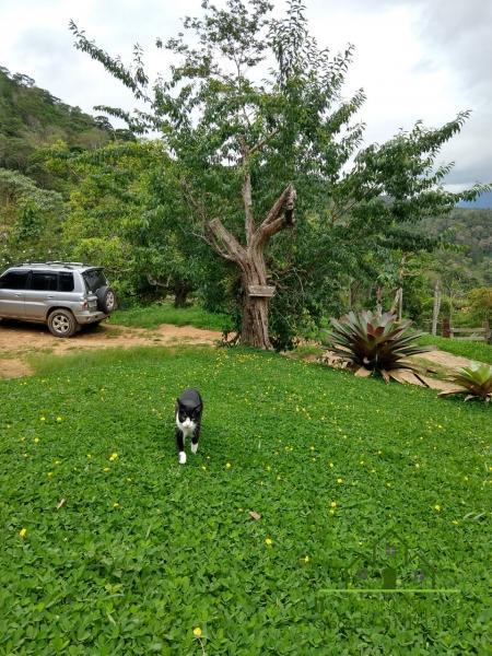 Fazenda / Sítio à venda em Vale das Videiras, Petrópolis - RJ - Foto 25