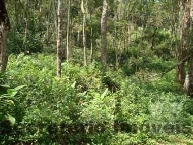 [SEC 2550] Terreno em Itaipava, Petrópolis/RJ